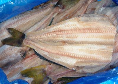 Hokke - mackerel